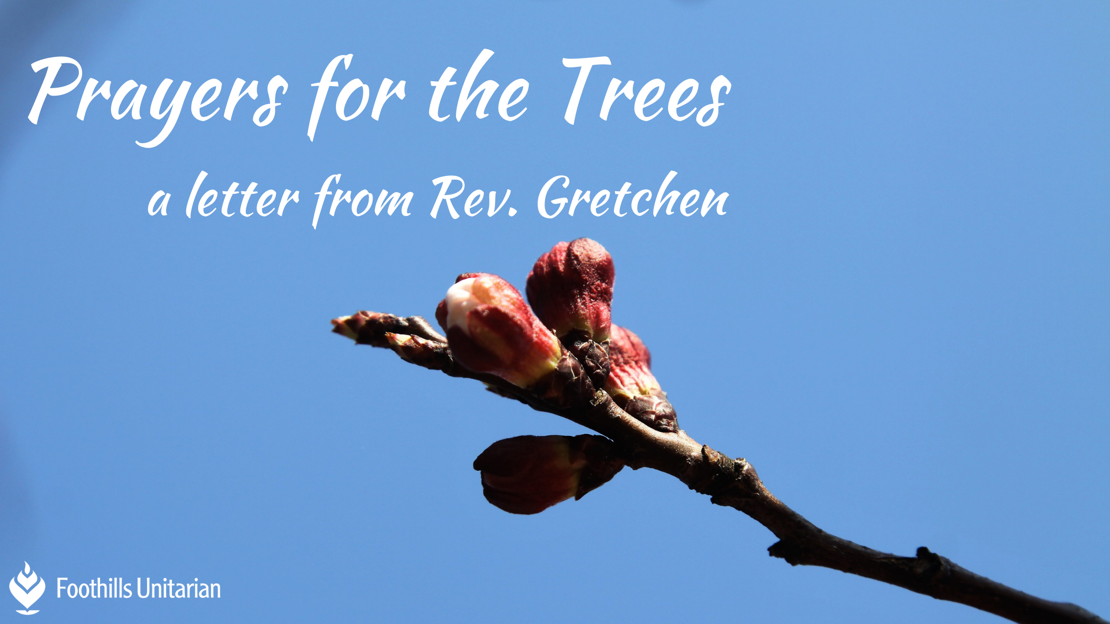 Prayers for the Trees: A Letter from Rev. Gretchen